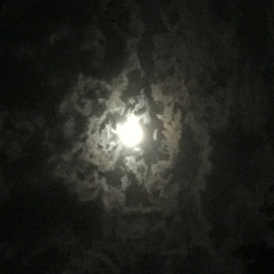 La lune affecterait-elle le goût du vin ?
