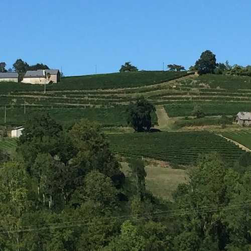 Le vignoble du Jurançon. img3015