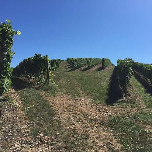Le vignoble du Jurançon. 0