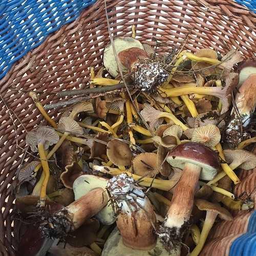 Les champignons img3693