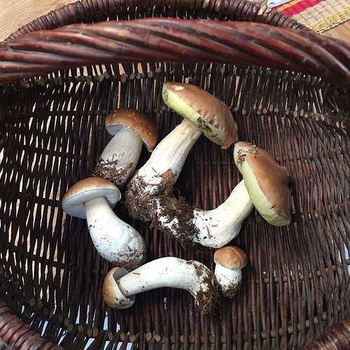 Les champignons 0