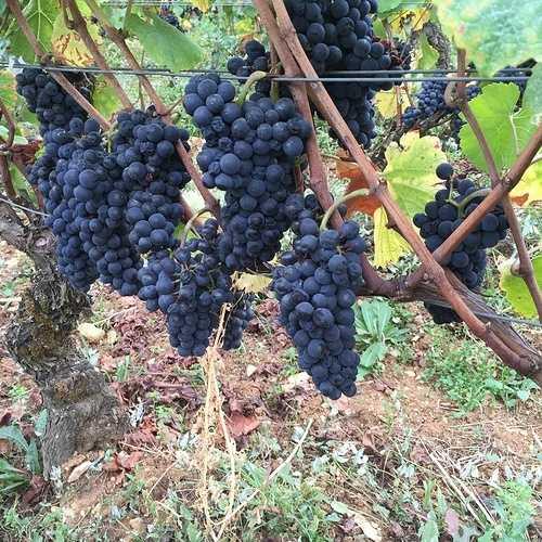 Alscace Grand Cru de Pinot Noir ? 0