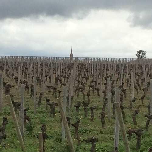 Le Millésime 2016 en Bordeaux img0300