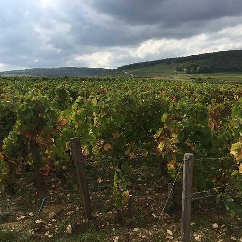 Les Climats du vignoble de Bourgogne img3284