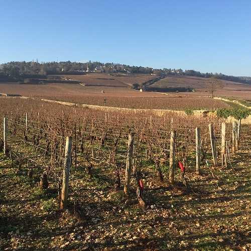 Les Climats du vignoble de Bourgogne img3785