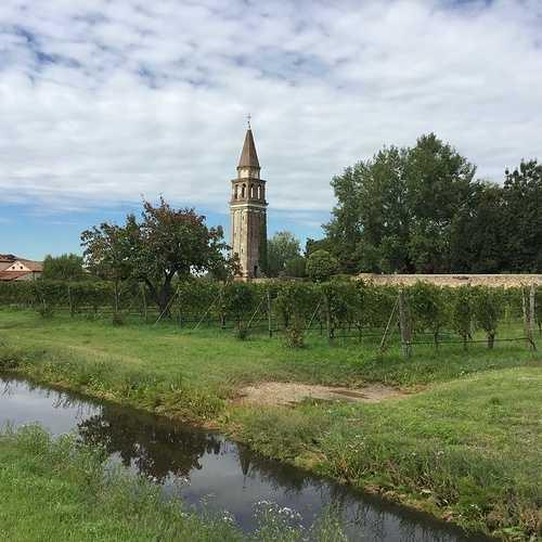 Le vignoble Vénitien img1421