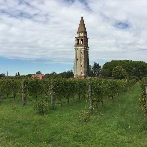 Le vignoble Vénitien img1422