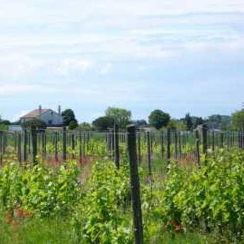 Le vignoble Vénitien l1420917