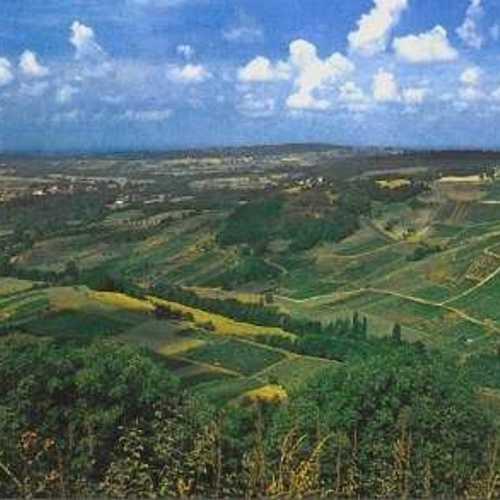Le vignoble du Jura arbois