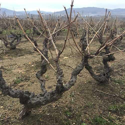 Le vin au fil des siècles img0237