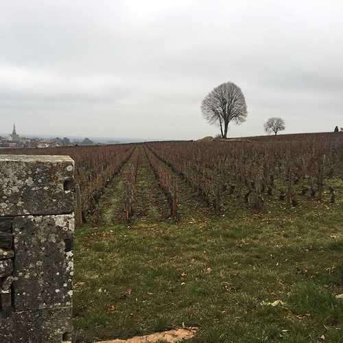 Le vin au fil des siècles img1767