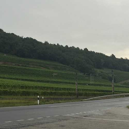 Le Domaine Grisoni, Cressier NE (Suisse) img2634