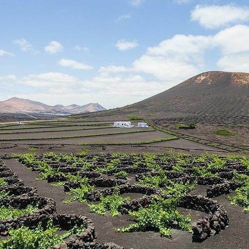 Le vignoble de Lanzarote 0