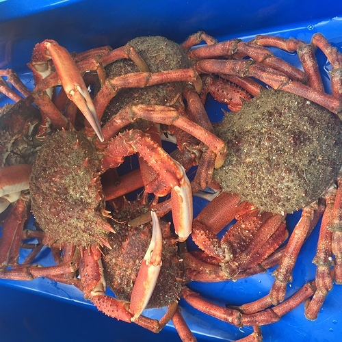 Les crabes img2046